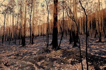 The social impact in the aftermath of disasters such as bushfires can cause major economic costs, according to research commissioned by the commissioned by the Australian Business Roundtable for Disaster Resilience and Safer Communities (Photo:  Elizabeth Donoghue/Flickr)