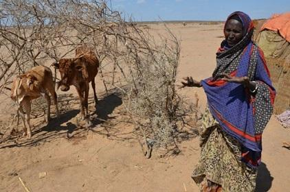 Drought in Ethiopia has led to successive failed harvests and widespread livestock deaths in some areas (Photo: WFP/Melese Awoke)