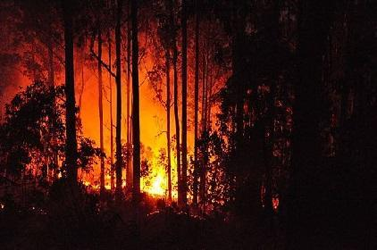 Forest fires in Madeira, Portugal in 2011 (Photo: anagh, via Wikimedia Commons)